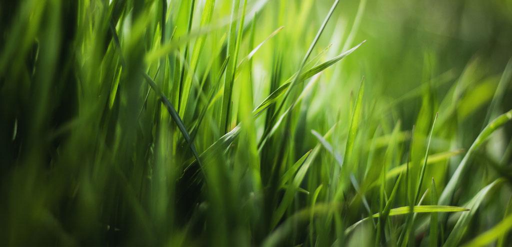 ein Gärtner für die Gartenpflege, den Landschaftsbau und für den Gartenbau