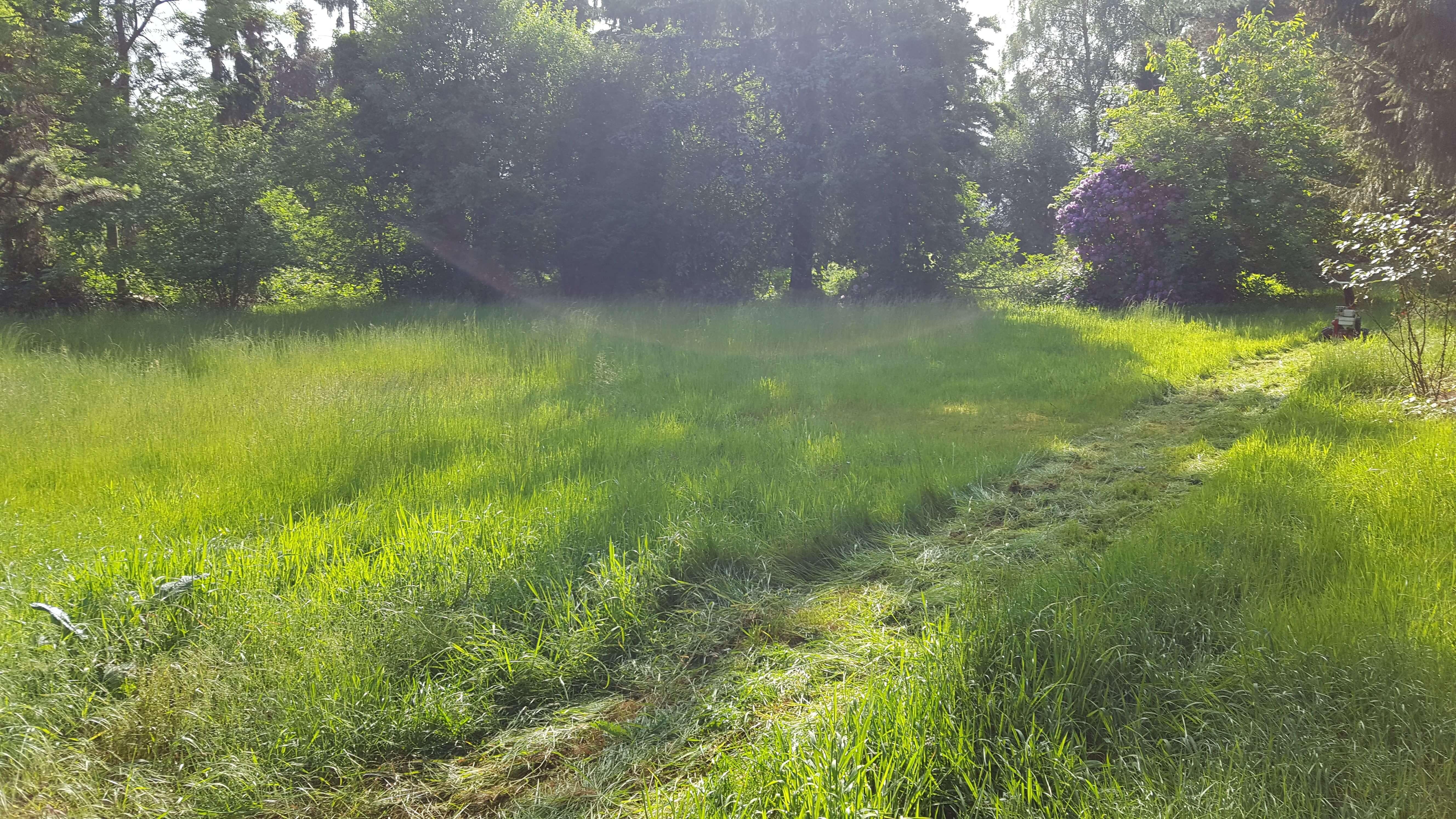 Rasen mähen_Gärtner Dortmund_Garten- und landschaftsbau Dortmund