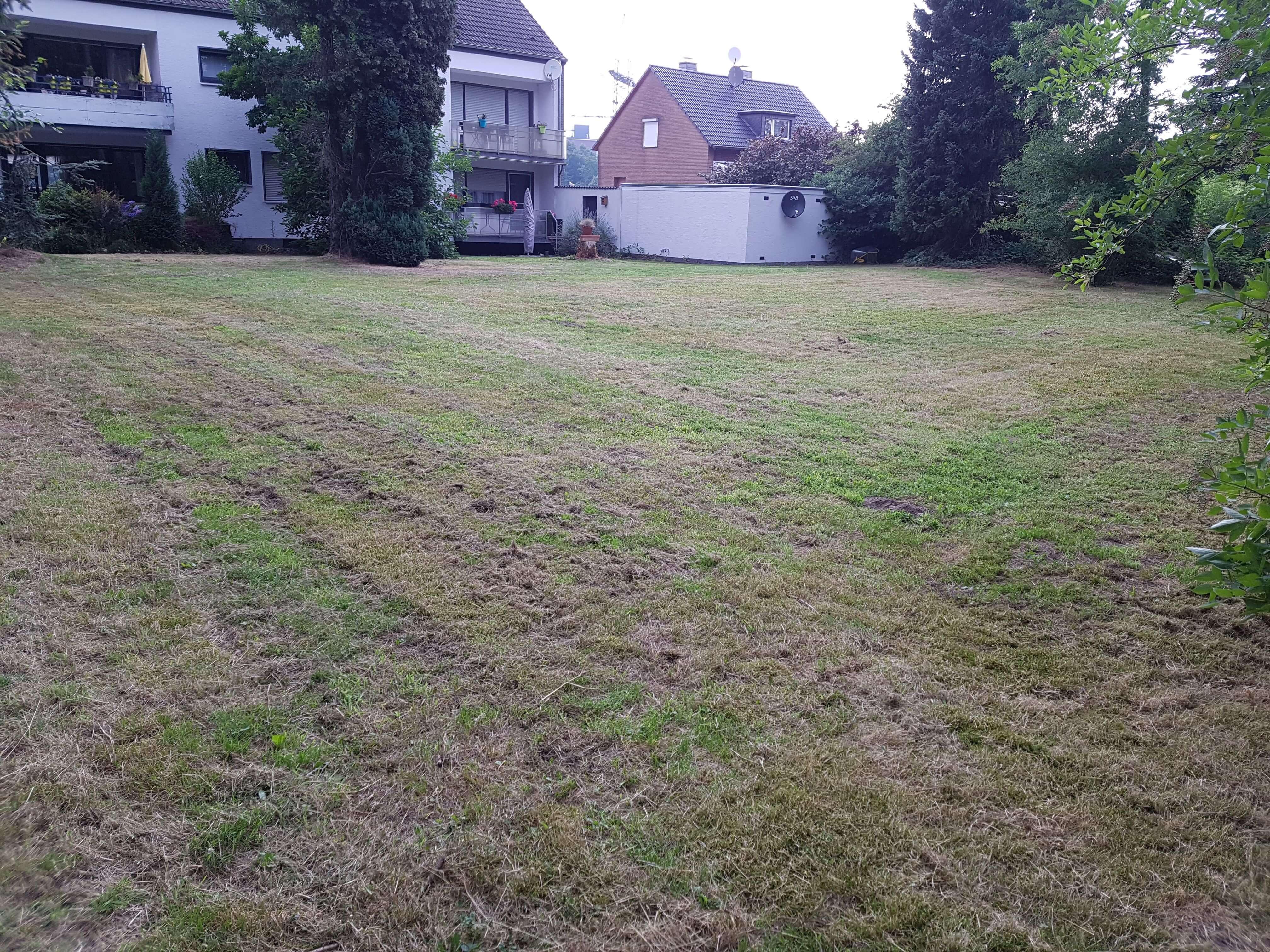 1.1Rasen mähen_Gärtner Dortmund_Garten- und landschaftsbau Dortmund1